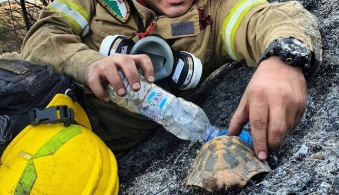 Αχαϊα: Viral η φωτογραφία του πυροσβέστη που φροντίζει χελώνα