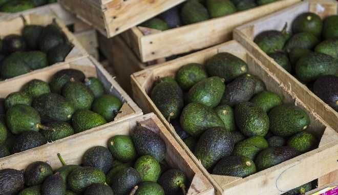 Crates of avocados from Michoacan available for sale at a market in Mexico City, Tuesday, Aug. 9, 2016. High avocado prices have fueled deforestation in Michoacan, where farmers cut down pines to clear the way for more avocado trees. (AP Photo/Nick Wagner)