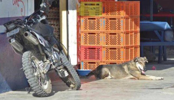 """Ο σύγχρονος """"Hachiko"""": Σκύλος επιστρέφει εκεί που έχασε τη ζωή του το αφεντικό του εδώ και πέντε χρόνια..."""