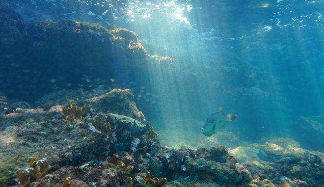 Βυθός της θάλασσας.