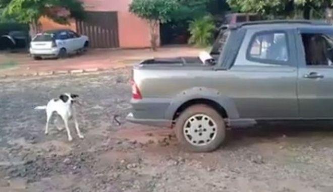 Αποτρόπαια εκδίκηση: Έσυραν μέχρι θανάτου τον σκύλο που δάγκωσε το παιδί τους