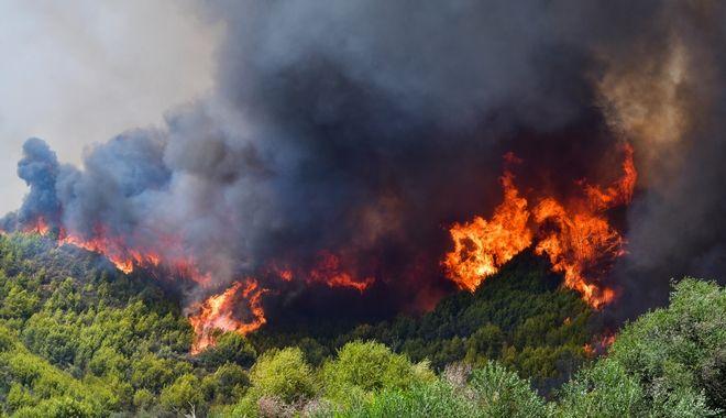 Πυρκαγιά στον δήμο Αρχαίας Ολυμπίας