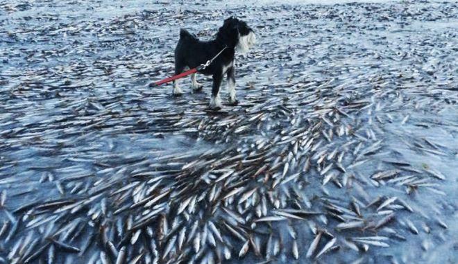 Νορβηγία: Χιλιάδες ψάρια πάγωσαν ακαριαία