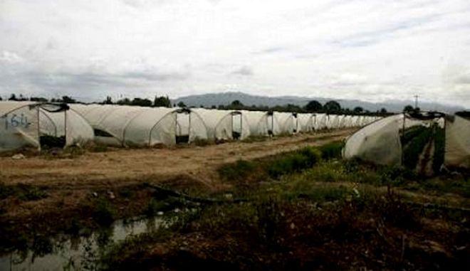 """Παραγωγοί φράουλας Μανωλάδας: """"Τα ΜΜΕ μας συκοφαντούν στηριζόμενα σε μεμονωμένο αλλά κατακριτέο περιστατικό"""""""