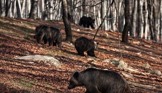 Ξύπνησαν οι αρκούδες στο Νυμφαίο καλωσορίζοντας την άνοιξη