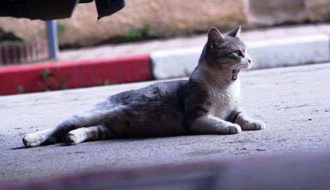 """Θεσσαλονίκη: """"Θα πατήσεις το γατί!"""" - Έτσι έκλεβαν τους οδηγούς"""