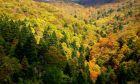 Εύβοια: Αυτό είναι το δάσος που καίγεται - Ένα από τα 19 του Natura στη χώρα μας