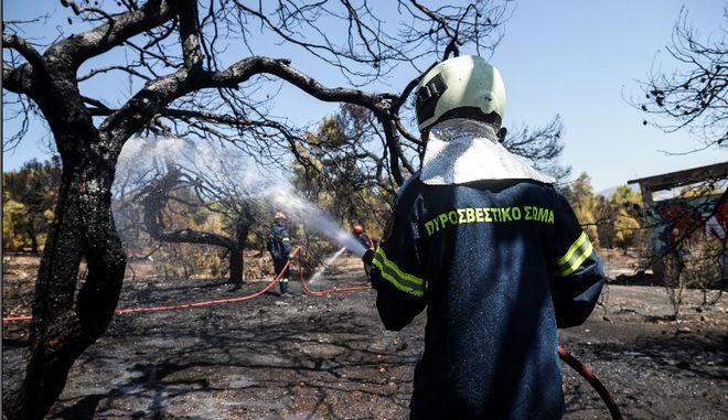 Υπό μερικό έλεγχο τέθηκε η φωτιά στην Λεύκη Καστοριάς
