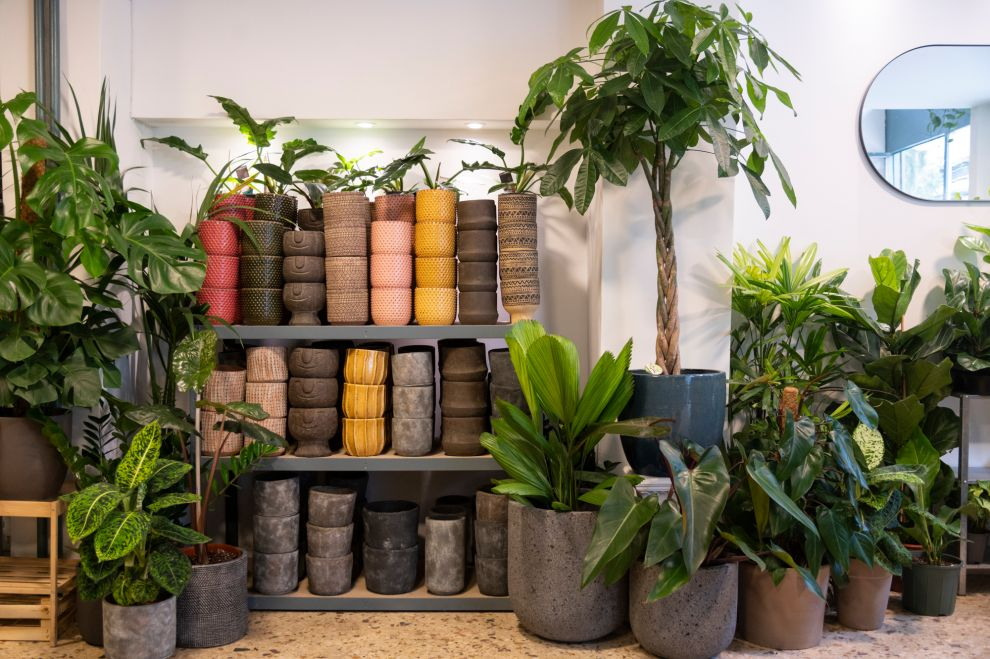 20 περίεργα φυτά για το σπίτι σου