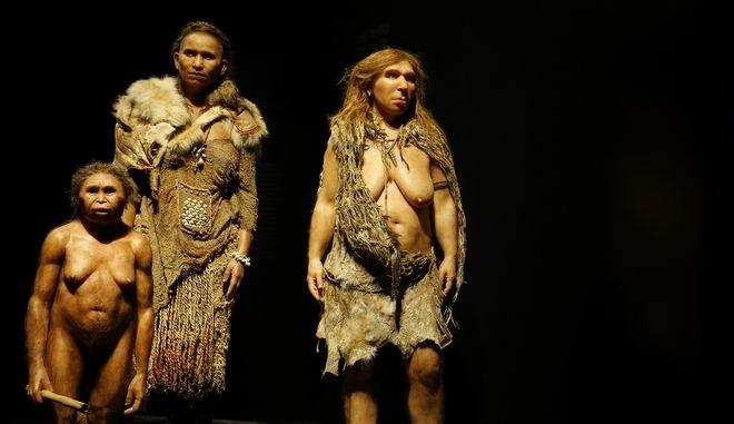 Ομοιώματα γυναικών από τα  είδη Flores, Homo Sapiens και Neanderthal που εκτίθενται στο Μουσείο Συμβολής στη Λιόν