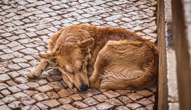 Δηλητηρίασαν δεκάδες ζώα στη Μυρτιά Ηρακλείου
