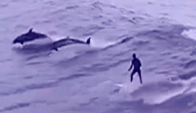 Υπέροχο θέαμα: Σερφάροντας με δελφίνια στα ανοιχτά της Τοσκάνης