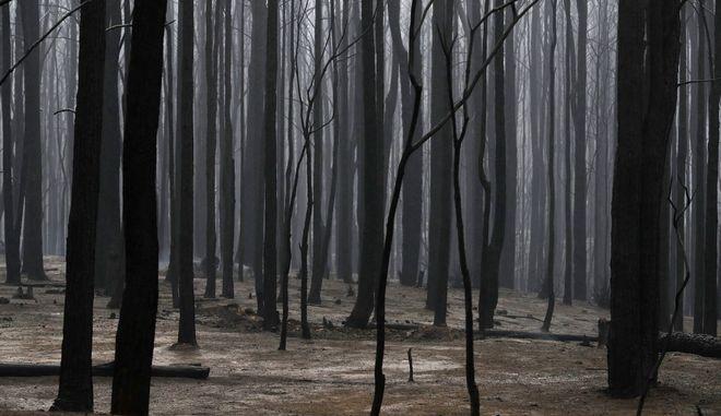 Στάχη έγιναν εκατομμύρια στρέμματα δάσους.