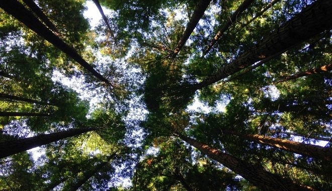 Η σωτηρία του περιβάλλοντος ξεκινάει από το σπίτι σου