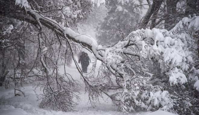 People walk next to a fallen branch due to heavy snowfall on a tree in the Botanical Garden in Moscow, Russia, Sunday, Feb. 4, 2018. Heavy snow has struck the Moscow region, as people struggle to make their way through large snowdrifts. (AP Photo/Maxim Marmur)