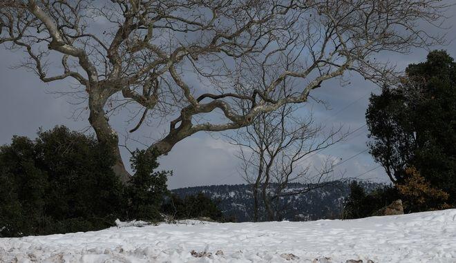 Χιόνια στην Πάρνηθα. Φωτό αρχείου.