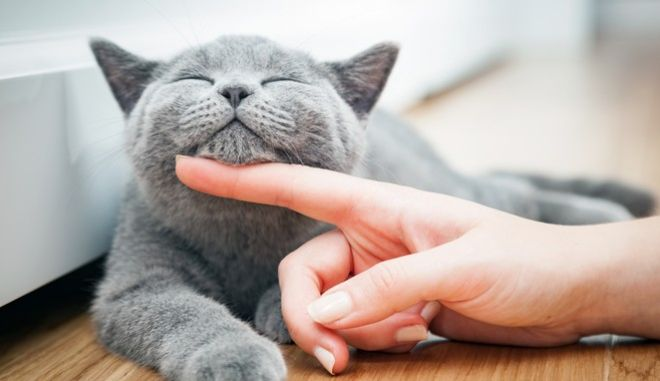 Oι γάτες είναι ικανές να αναπτύξουν δεσμούς με τους ιδιοκτήτες τους, αλλά όχι σε απόλυτο βαθμό. Και υπάρχει λόγος.