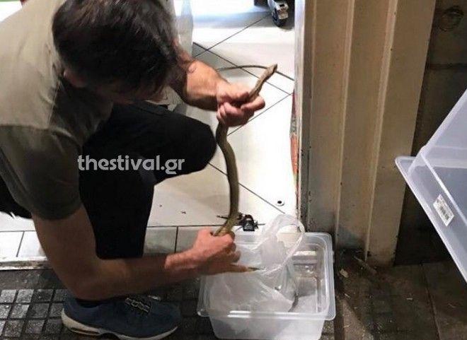 Το φίδι λαφιάτης που αναστάτωσε την Θεσσαλονίκη