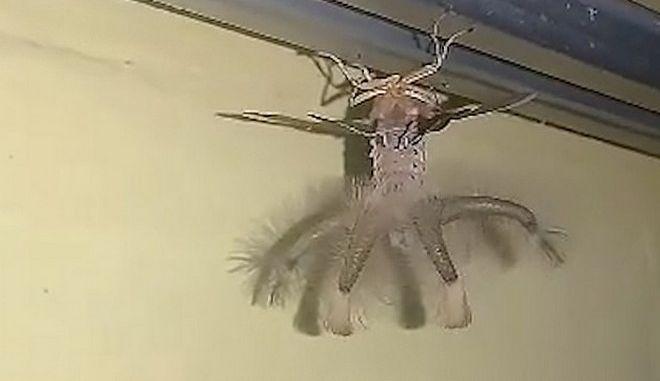 Το περίεργο πλάσμα που εθεάθη σε σπίτι στο Μπαλί