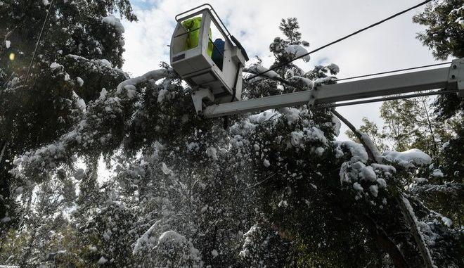Πτώση δέντρων λόγω της κακοκαιρίας Μήδεια (ΦΩΤΟ ΑΡΧΕΙΟΥ)