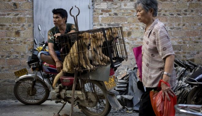 Φεστιβάλ κρέατος σκυλιών στην Κίνα