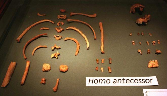 Επιστήμονες κατάφεραν να εξάγουν από οδοντικό σμάλτο το αρχαιότερο γενετικό υλικό που έχει ποτέ αποκτηθεί