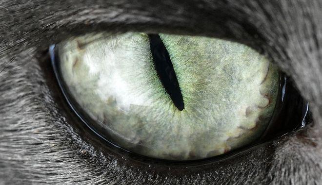 Μάτι γάτας - φωτογραφία αρχείου