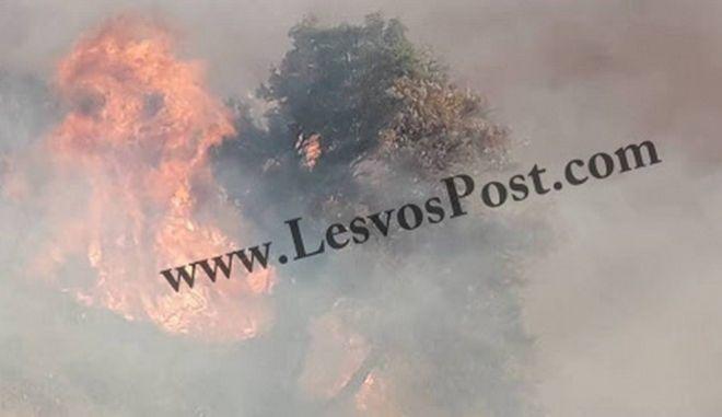 Λέσβος: Μεγάλη φωτιά στο Μεγαλοχώρι Πλωμαρίου