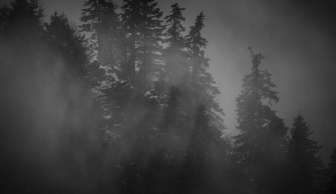 Ομίχλη στο ελατόδασος στο Περτούλι Τρικάλων - Φωτό αρχείου