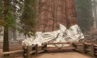 Πυροσβέστες τύλιξαν με αντιπυρική κουβέρτα το μεγαλύτερο δέντρο του κόσμου