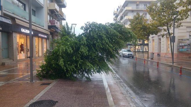 Αρκετές είναι οι περιπτώσεις πτώσεις δέντρων στο κέντρο της πόλης της Καλαμάτας