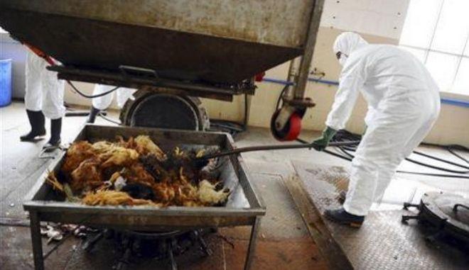 Επιδημία των πτηνών στην Ευρώπη: Σφαγιάζουν χιλιάδες πάπιες και χήνες