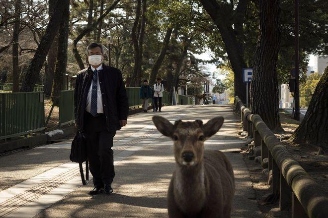 Ελάφι στην Ιαπωνία περπατά δίπλα σε ανθρώπους.