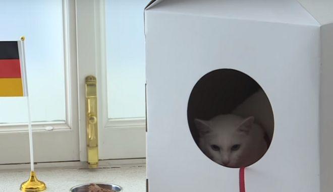 Αυτός είναι ο Αχιλλέας: Ο λευκός, κουφός γάτος που θα προβλέπει τα αποτελέσματα του μουντιάλ στη Ρωσία