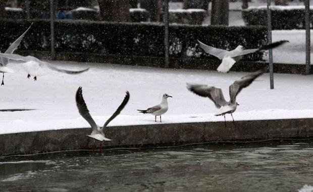 Και τα πουλιά προσπαθούν να προσαρμοστούν