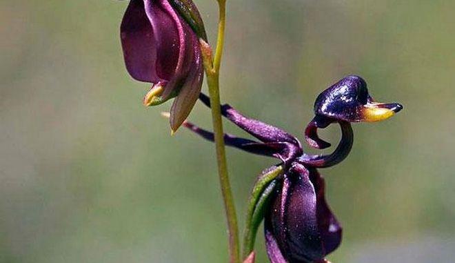 dinfo.gr - 22 φωτογραφίες παράξενων λουλουδιών που μοιάζουν με.. κάτι άλλο!