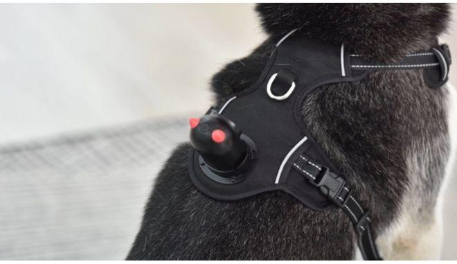Σκύλος με κάμερα