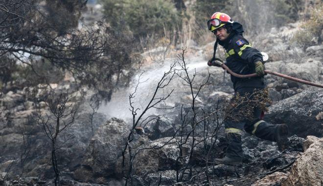 Πυρκαγιά σε δασική έκταση, Αρχείο