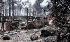 Η καταστροφική πυρκαγιά στην Εύβοια άφησε πίσω της χιλιάδες καμένες εκτάσεις παρθένου δάσους