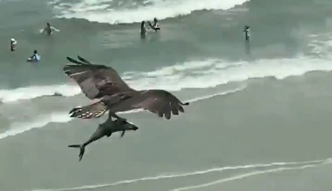 Η αλήθεια για το μυστηριώδες viral βίντεο με το πουλί και το τεράστιο ψάρι