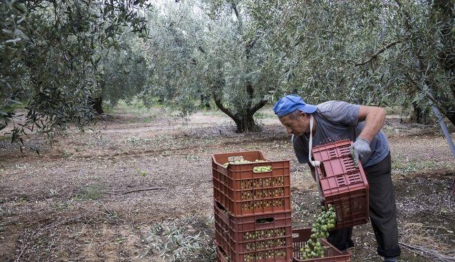 Αγρότης στη Χαλκίδα