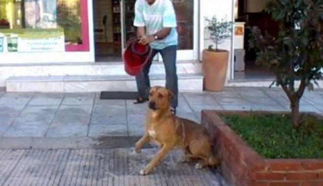 Βίντεο: Φαρμακοποιός μπουγελώνει σκύλο με χλωρίνη για να τον απομακρύνει από το κατάστημά του