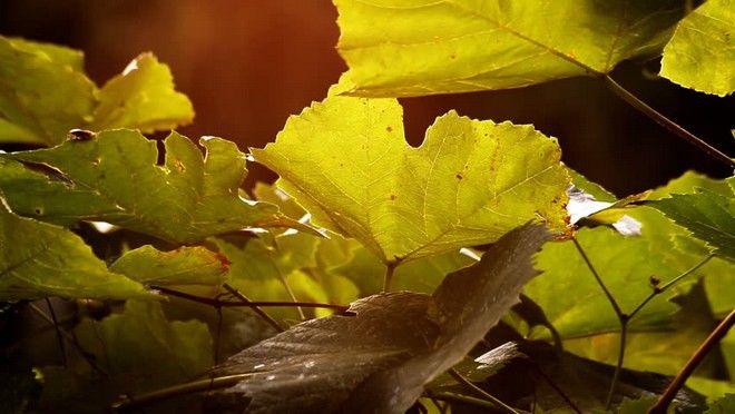 Γαστρονομία και Χριστιανισμός - Οι συνταγές που συνοδεύουν τις γιορτές της Ορθοδοξίας