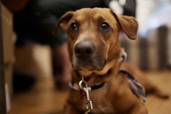 Ο Κ. Μητσοτάκης υιοθέτησε ένα σκυλάκι από το καταφύγιο Ηλιούπολης