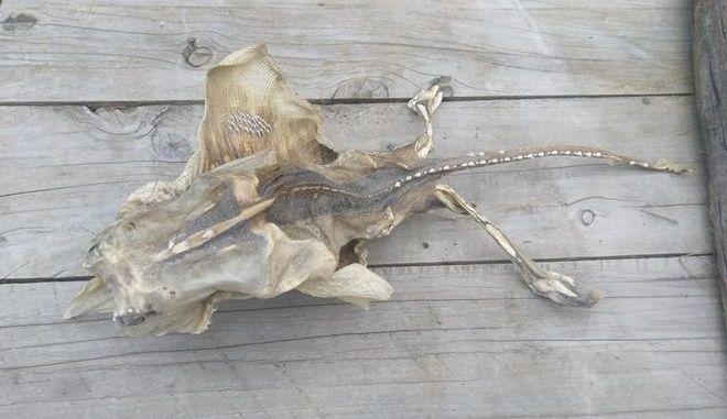 Το περίεργο πλάσμα που ξεβράστηκε στη Ν. Ζηλανδία