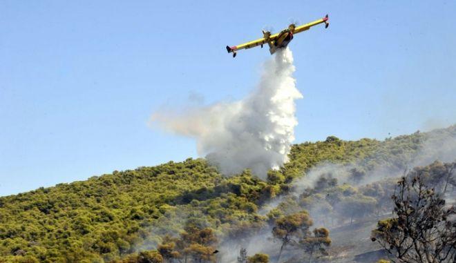 Στις φλόγες τυλίχθηκε για ακόμη μία φορά η Κερατέα. Η φωτιά ξέσπασε το μεσημέρι της Πέμπτης 19 Ιουλίου 2012, λίγο μετά τις 14:00. Στην επιχείρηση κατάσβεσης παίνουν μέρος συνολικά 70 πυροσβέστες με 35 οχήματα, 36 άτομα πεζοπόρο τμήμα, 7 αεροσκάφη και 2 ελικόπτερα. Επίσης επιχειρούν 12 υδροφόρα οχήματα από τους γύρω δήμους και 24 εθελοντές. Η φωτιά καίει κατοικίες, πεύκα, ελιές και χαμηλή βλάστηση.  (EUROKINISSI/ΑΝΤΩΝΗΣ ΝΙΚΟΛΟΠΟΥΛΟΣ)