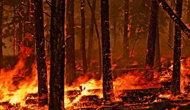 Περίπου 90.000 στρέμματα δάσους χάθηκαν στις μεγάλες φωτιές