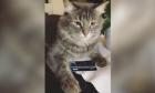Βίντεο: Γάτα προστατεύει με νύχια και δόντια πιστωτική κάρτα