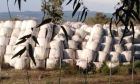 """""""Υγειονομική βόμβα"""" με 100.000 δέματα στερεών απορριμμάτων στον Αλφειό"""