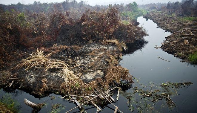 Abgebrannter Wald in der Provinz Riau, Sumatra, Indonesien. Viele der Brnde sind illegal gelegt, um Platz fr Palmlplantagen zu schaffen.
